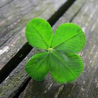 Be the 4 Leaf Clover of the Job Hunt